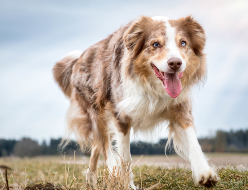 Hunde Fotoshooting mit Chilli in Gilching